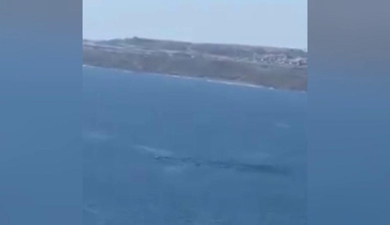 Avistan una ballena nadando en las Palmas de Gran Canaria