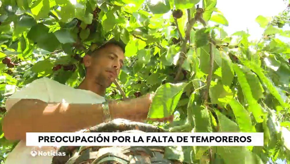 El Gobierno permite compatibilizar el paro con la contratación en el campo para que se puedan recoger las cosechas