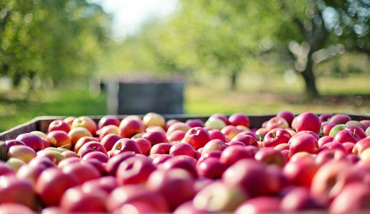 La campaña de recogida de la fruta comienza en una semanas