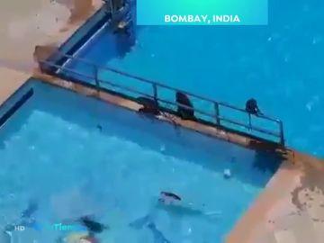 Los monos se adueñan de Bombay.