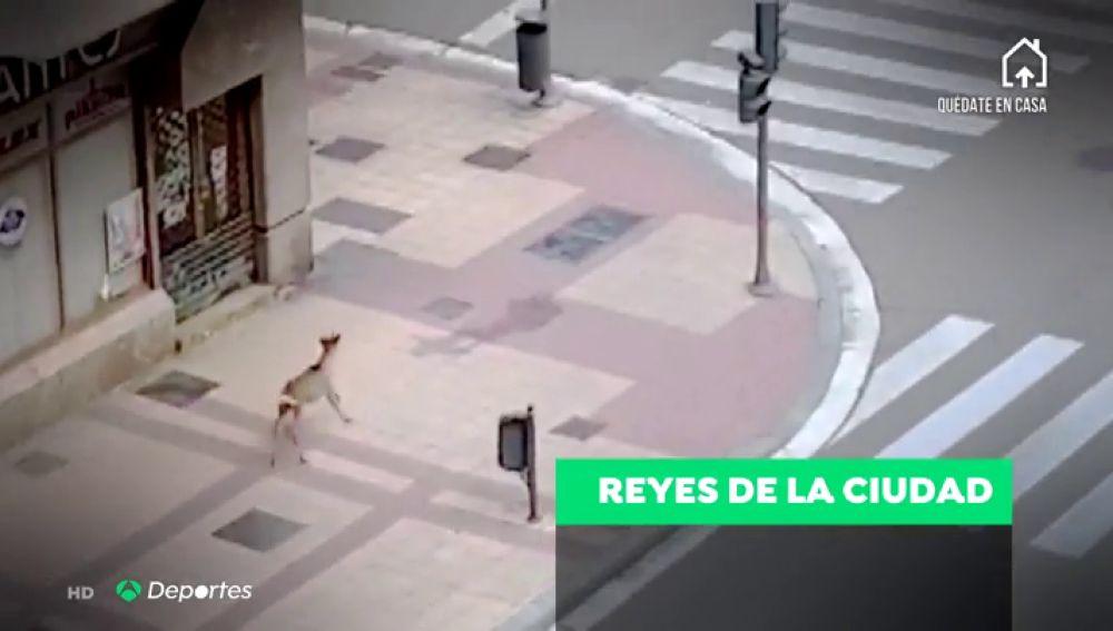 Los animales invaden las calles ante el confinamiento por el coronavirus
