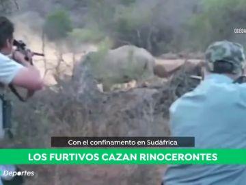 """Los furtivos aprovechan el confinamiento en Sudáfrica para cazar rinocerontes: """"Se caza uno cada día"""""""