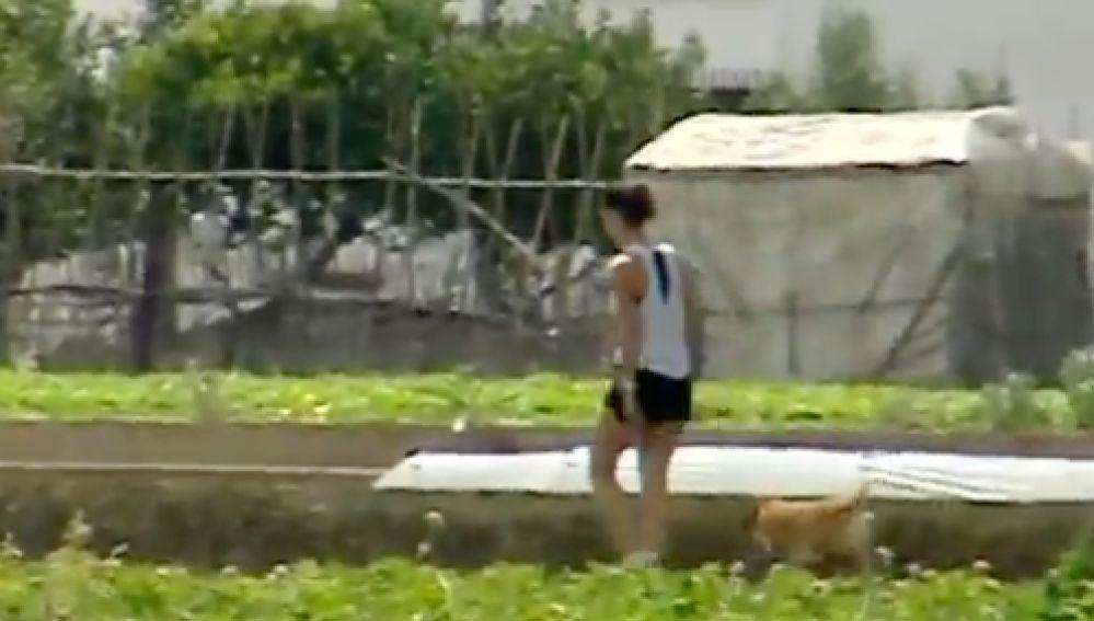 caminado por cultivo