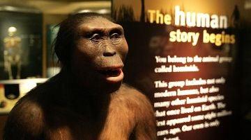 Recreación de un Australopithecus