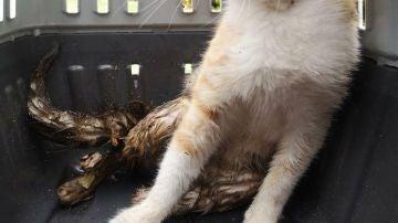 La protectora de Ciudad Real denuncia los disparos contra gatos
