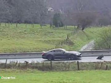 Un coche deportivo se lleva por delante a un jabalí en una carretera de Galicia