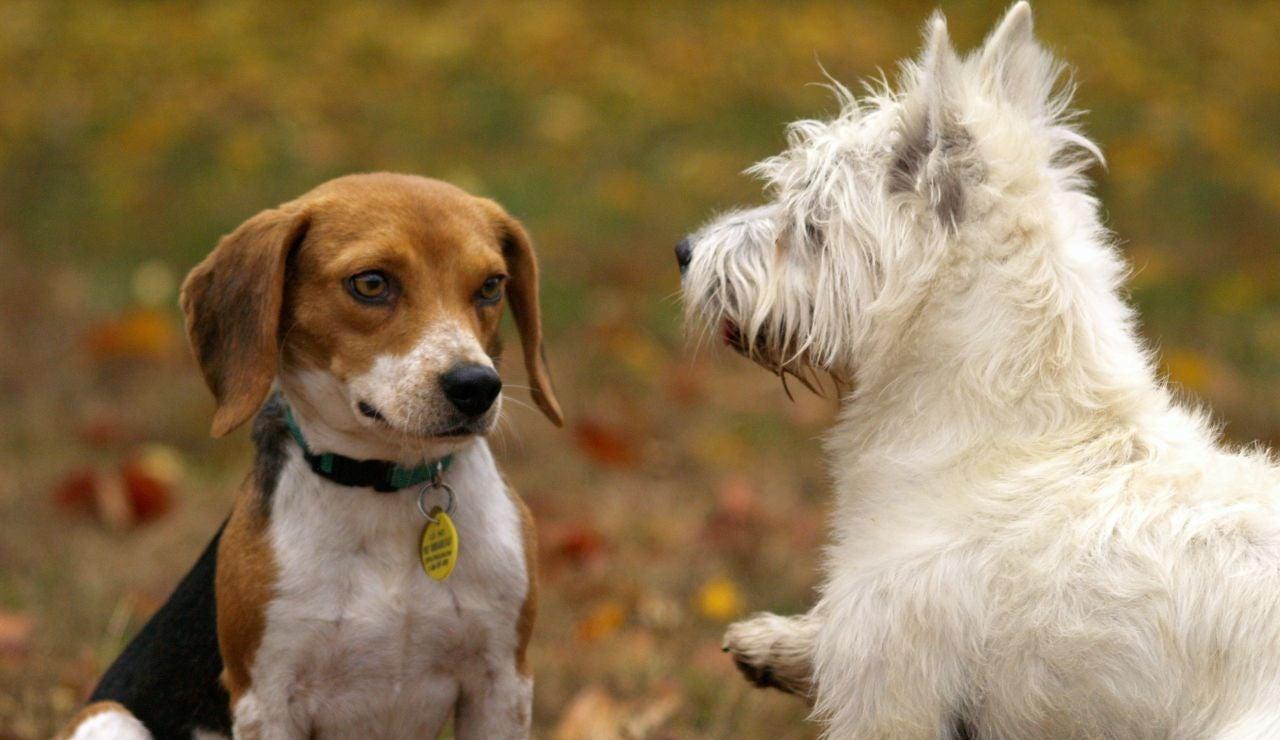 Dos perros jugando