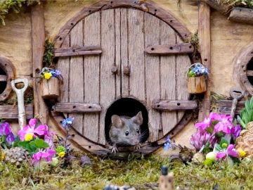 Casas para ratones