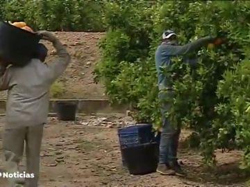 El sector agrario exige el cese de la ministra Yolanda Díaz por pedir que se investigue si hay esclavitud en el campo