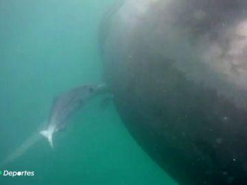 La sorpresa de un hombre al encontrarse con un enorme tiburón en la cosa de Granada