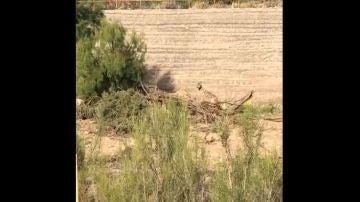 Vídeo: Así es una persecución real entre un coyote y un correcaminos