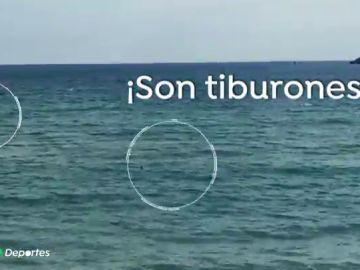"""El nadador paralímpico Ariel Schrenck huye de dos tiburones en Gerona: """"Me entró un pánico terrible"""""""