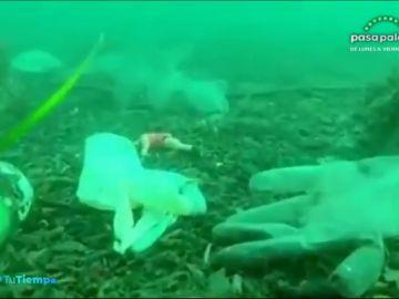 Guantes y mascarillas en el mar