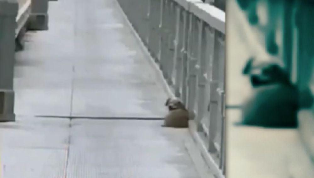 Perro en el puente