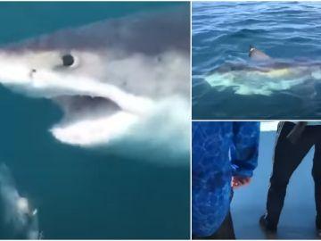 El angustioso momento en el que un enorme tiburón de más de 1.000 kilos sorprende a un grupo de pescadores