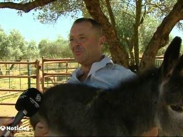 Burros antiestrés en Doñana