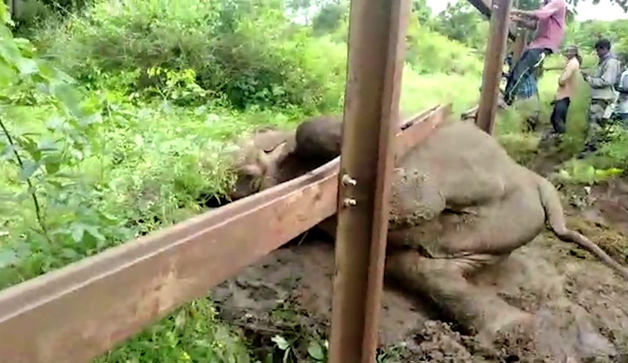 Elefante atrapado