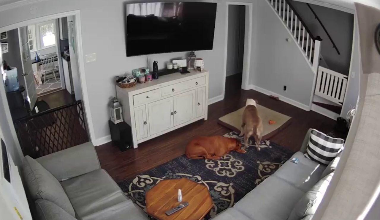 Perro cuidando a otro perro