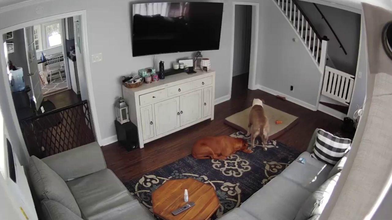 VÍDEO: Un perro cuida de su amigo que está enfermo