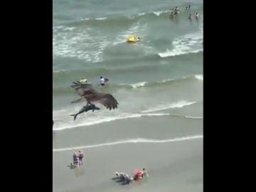 Un águila caza a un tiburón