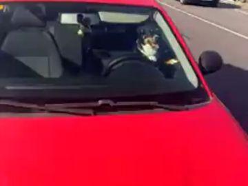 Deja a su perro encerrado en el coche al sol y se va a la playa en Poio en Pontevedra