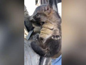 Rescata a este cachorro