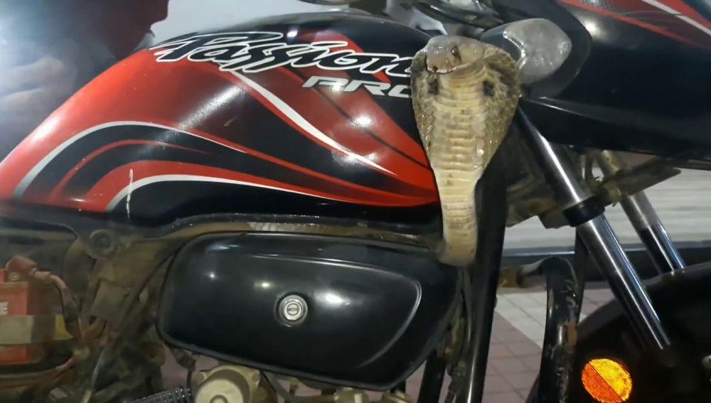 Serpiente escondida