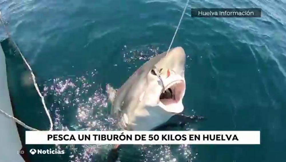 Un aficionado de Punta Umbria pesca y suelta un tiburón zorro de 50 kilos