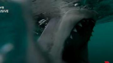 Momento en el que un tiburón muerde el motor de una embarcación