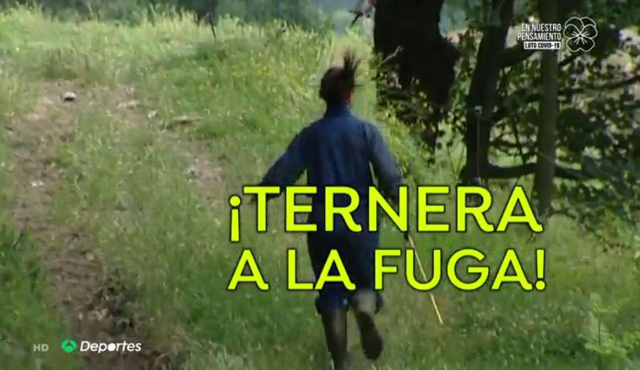 Imma, la ganadera, veterinaria y ultrarunner que corre con sus vacas por la montaña de Girona