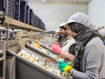 Trabajadoras en un almacén de ajos