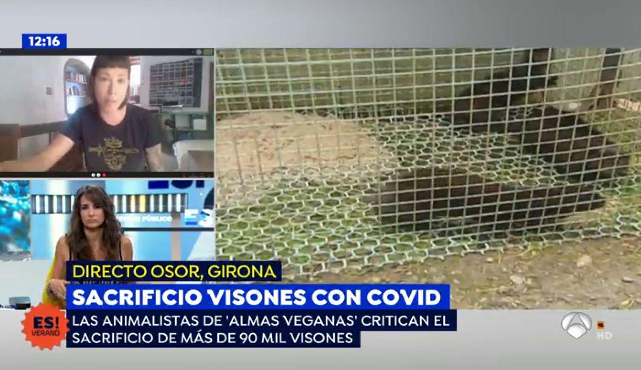 nueva amlas veganas