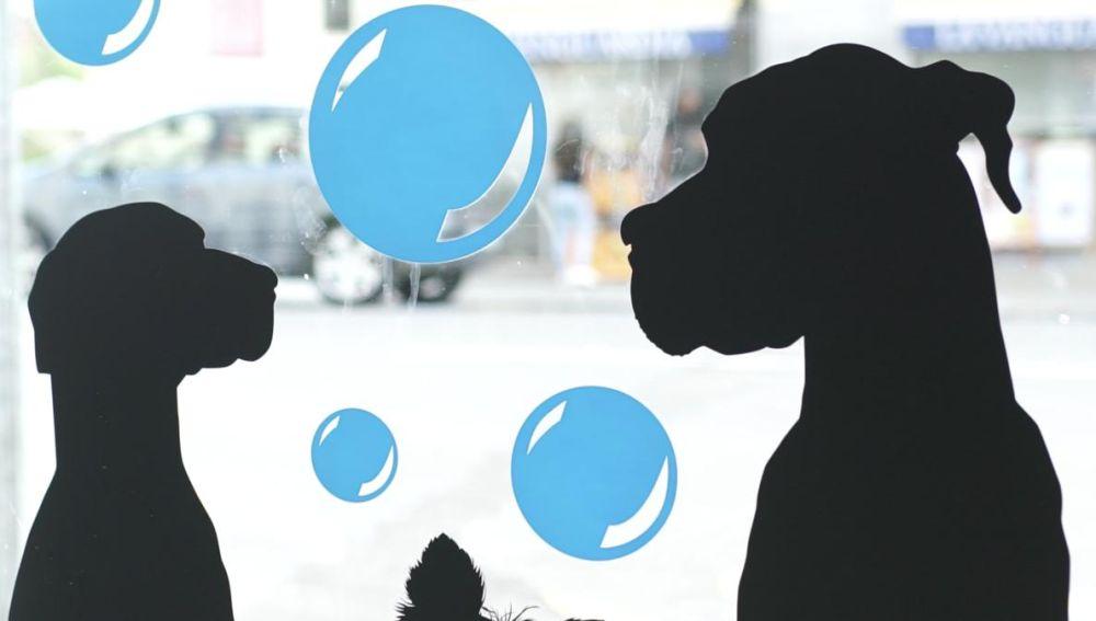 Día Mundial del Perro 2020. Servicio Spa para perros.
