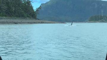 Una gigantesca orca se acerca a un pequeño barco pesquero en Alaska