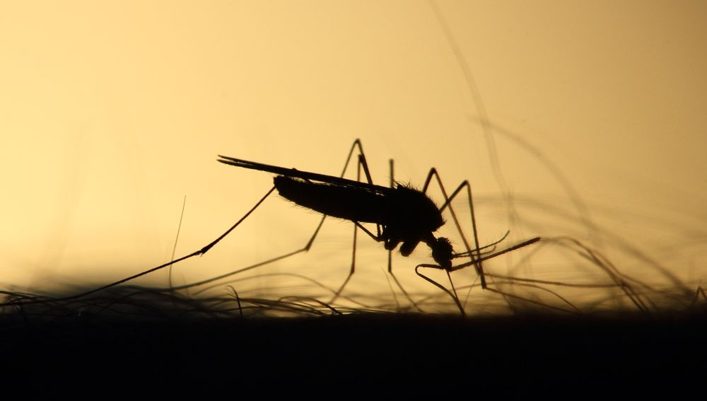 Virus del Nilo: estos son los mosquitos sospechosos de la infección en Sevilla