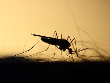 Segunda víctima mortal por la fiebre del virus del Nilo