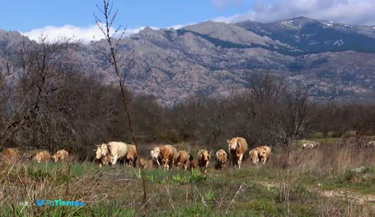 ¿Cómo podemos aplicar la tecnología para conseguir más datos sobre el estado del ganado?