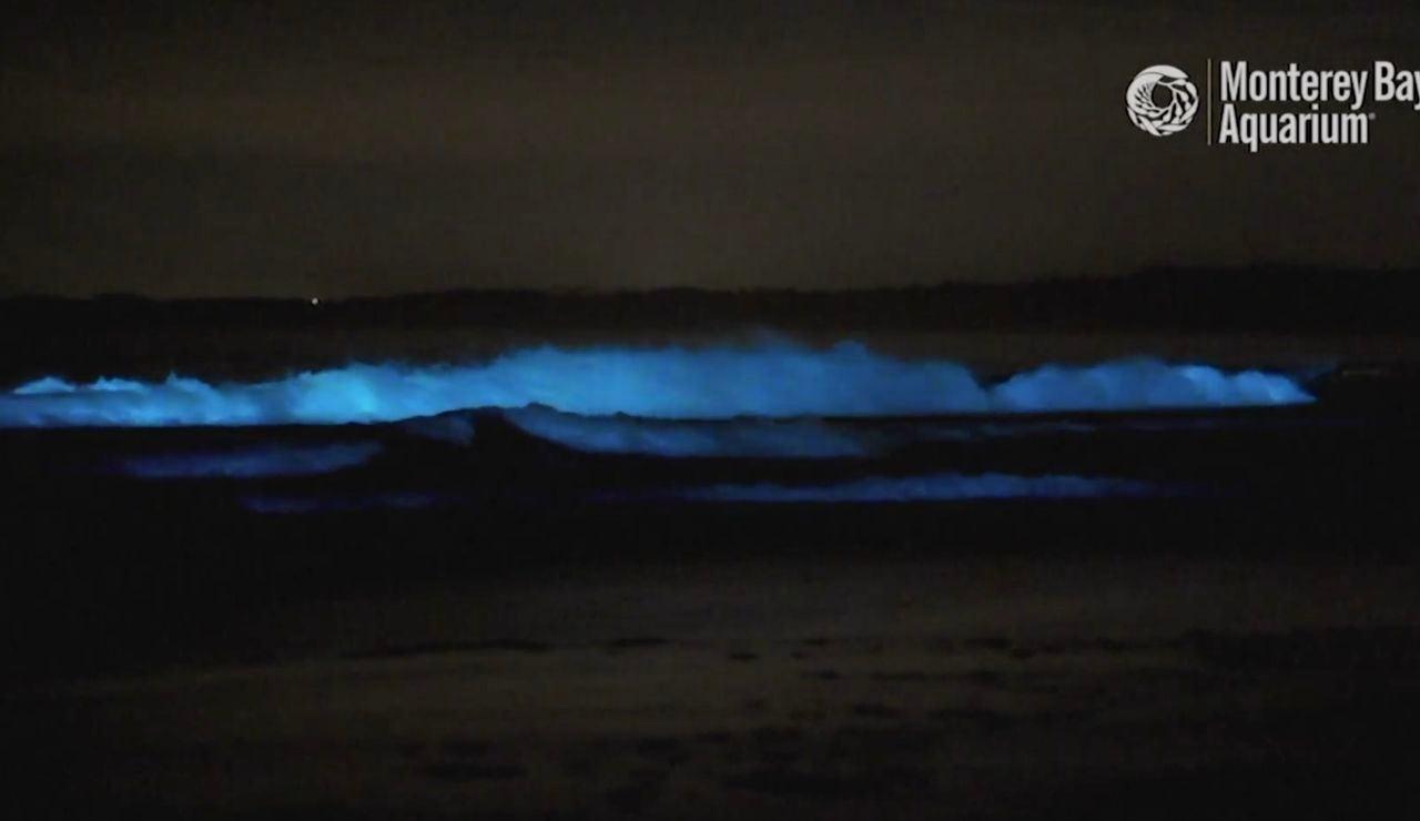 Olas bioluminiscientes en California
