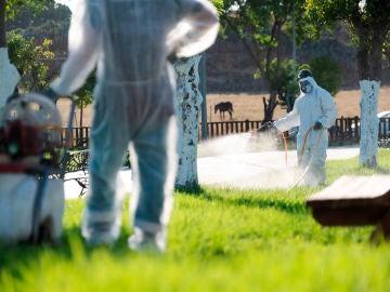 Varios operarios fumigan unos jardines para intentar detener al virus del Nilo en La Puebla del Río, Sevilla
