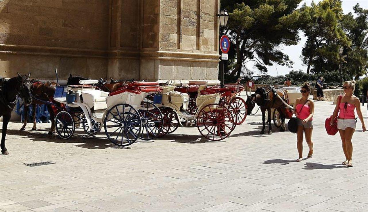 """Lanzan una campaña para acabar con los caballos de calesas: """"Turista sálvame, acaba con mi sufrimiento"""""""
