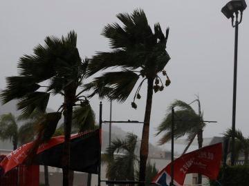 Palmeras azotadas por la tormenta Laura en Guayama, sur de Puerto Rico
