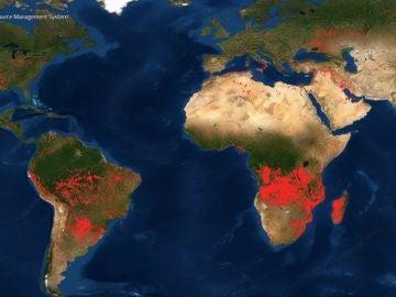 La preocupante situación que vive el Amazonas y África por los incendios forestales