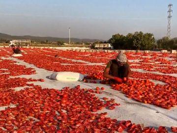 Estos son los tomates secos de Turquía que triunfan en la cocina mediterránea