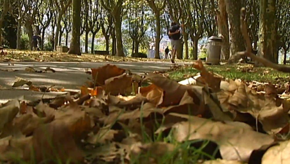¿Por qué se produce la caída de las hojas en verano?