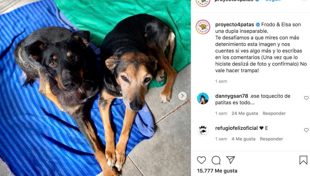Instagram @proyecto4patas