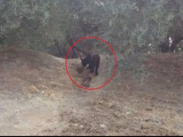Fotografía de la supuesta pantera negra en Granada
