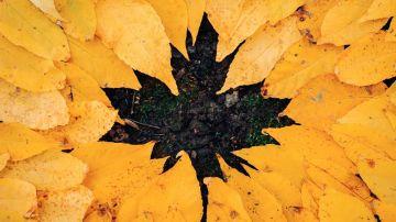 Equinoccio de otoño 2020: Rituales para celebrar la llegada del otoño