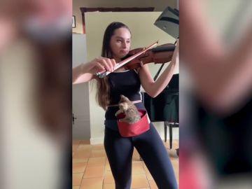 VÍDEO: Una violinista toca para que su gatita se duerma dentro de una riñonera