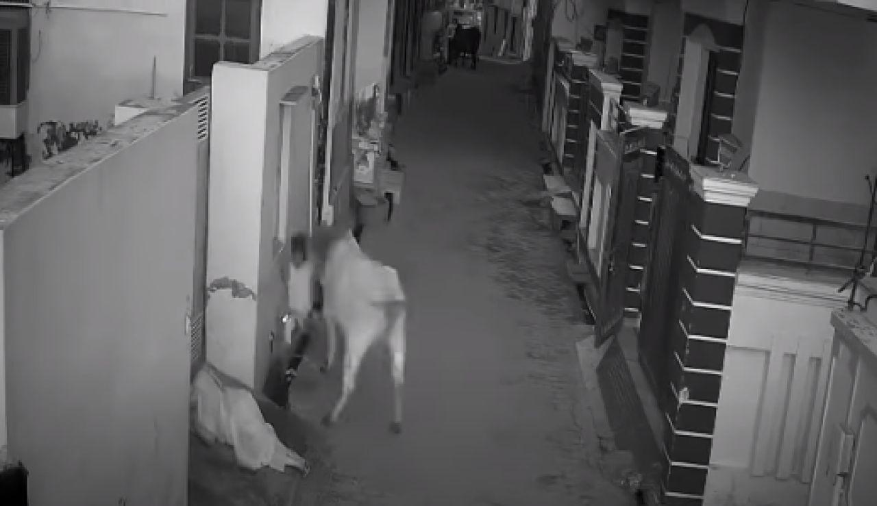 Ataque de un toro en India