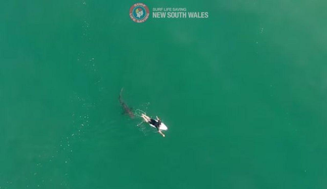Matt Wilkinson y su encuentro con un tiburón
